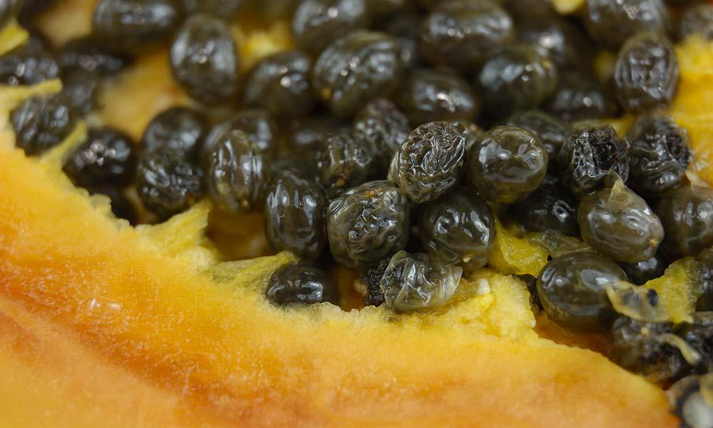 Papaya-001